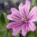 IMG_0535_Pink Flower 2