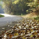 IMG_5959_Autumn Road_L
