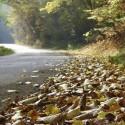 IMG_5959_Autumn Road_L