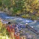 IMG_6682_Lake Louise Stream