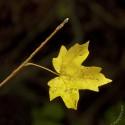 Set4_Autumn-2011_02