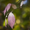 Set4_Autumn-2011_03