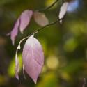 Set4_Autumn-2011_03