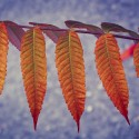 Set4_Autumn-2011_07