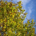 Set4_Autumn-2011_14