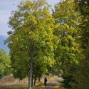 Set4_Autumn-2011_15