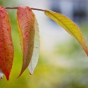 Set4_Autumn-2011_22