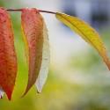 Set4_Autumn-2011_22