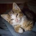 Set6_Kittens 1_01