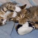 Set6_Kittens 1_02