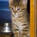 Set6_Kittens 1_03