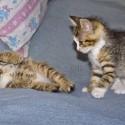 Set6_Kittens 1_04