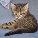 Set6_Kittens 1_05