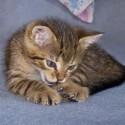 Set6_Kittens 1_06