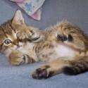 Set6_Kittens 1_07