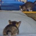 Set6_Kittens 1_08