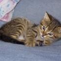 Set6_Kittens 1_09