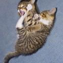 Set6_Kittens 1_10