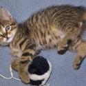 Set6_Kittens 1_12