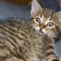 Set6_Kittens 1_13