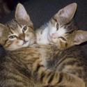 Set6_Kittens 1_16