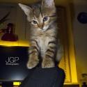 Set6_Kittens 1_17