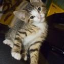 Set6_Kittens 1_18