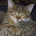 Set6_Kittens 1_19