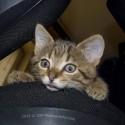 Set6_Kittens 1_20