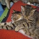 Set7_Kittens 2_02