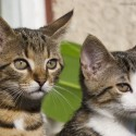 Set7_Kittens 2_04