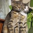Set7_Kittens 2_05