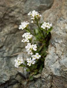 Balea_Lake_May_2012_05_JGP-Photography