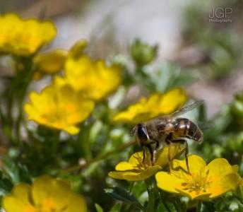 Balea_Lake_May_2012_03_JGP-Photography